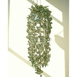 "Neuhaus Decor 37"" Begonia Rex Ivy, Artificial Hanging Plant (Without Pot) 102"