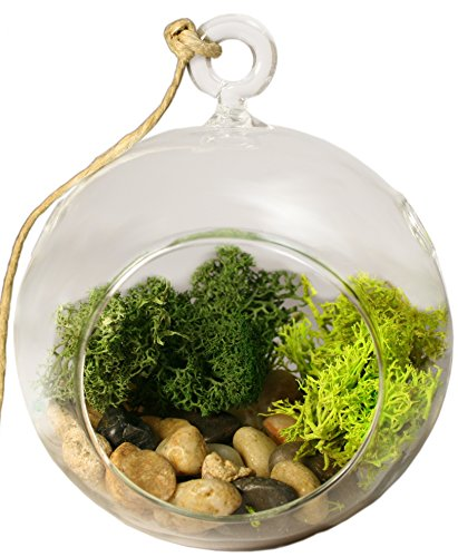 Hanging Glass - Air Plant Succulent Terrarium Kit - Glass with Moss, Polished River Rocks, Hanging String, and eyelet. (Glass Globe) - Terra Bronze Outdoor Hanging