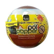 Nema Globe 817504004249 Pot Popper 4 X 1 Million Beneficial Nematodes (S.Feltiae)