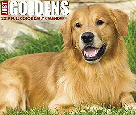Just Goldens 2019 Box Calendar (Dog Breed Calendar) Willow Creek Press 154920324X Calendars NON-CLASSIFIABLE