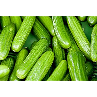Persian Beit Alpha Cucumber Seeds, Lebanese Cucumber, Non-GMO, (30 Seeds) : Garden & Outdoor