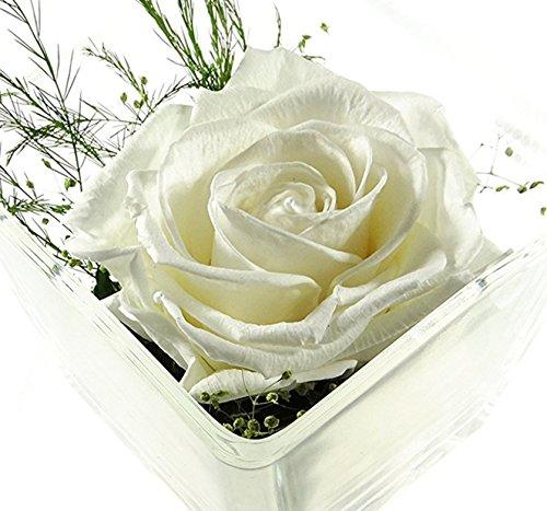 Rosen-te-amo Konservierte-Rosen – Blumen-Gesteck aus ECHTE Blumen in ...