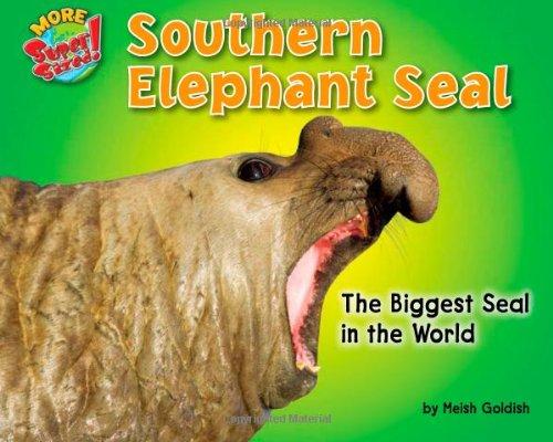 elephant seals - 8