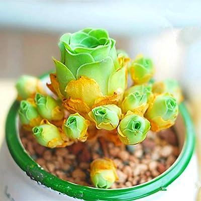 100pcs Mix Bonsai Living Stones Flower Succulent Cactus Organic Plant Home Garden