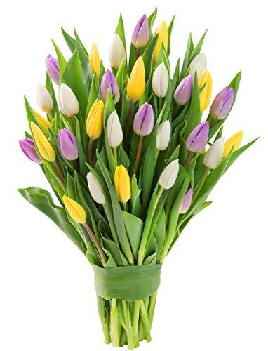 Farm2Door Combo Pack of Fresh Tulips: 10 Purple, 10 Yellow and 10 White Tulips - Farm Direct Wholesale Fresh Flowers (Combo Tulip)