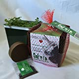 Priscilla's Grow Your Own Catnip Kit for your Pet Kitty Cat
