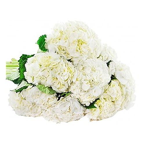 Farm fresh flowers amazon farm2door farm direct wholesale fresh flowers 30 stems of select white hydrangeas mightylinksfo Images