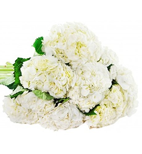 Farm fresh flowers amazon farm2door farm fresh hydrangeas 15 fresh white hydrangeas naturally colored from colombia mightylinksfo