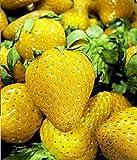 白鳥の高度に栄養価の高いフルーツの種。200Pcのまれな黄色いいちごの種。庭の盆栽の果実