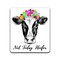 Cow Not Today Heifer Vinyl Decal Sticker | Cars Trucks Vans SUVs Windows Walls Cups Laptops | Full Color Printed and Laminated | 5 Inches | KCD2457