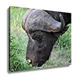 Ashley Canvas, Cape Buffalo Syncerus Caffer Eastern Cape South Africa, Home Decoration Office, Ready to Hang, 20x25, AG6338566
