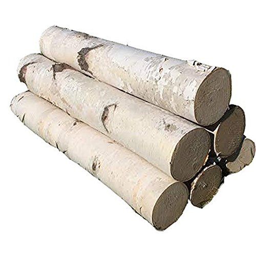 Six White Birch Logs 36'' by Northern Boughs