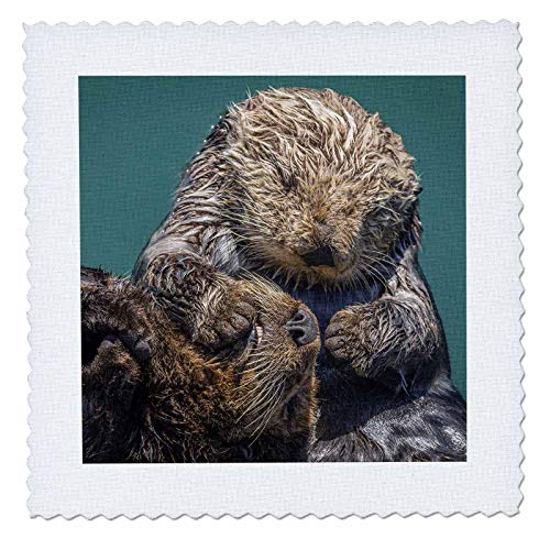 3dRose Danita Delimont - Otters - USA, California, Morro Bay State Park. Sea Otter mother with pup. - 10x10 inch quilt square ()