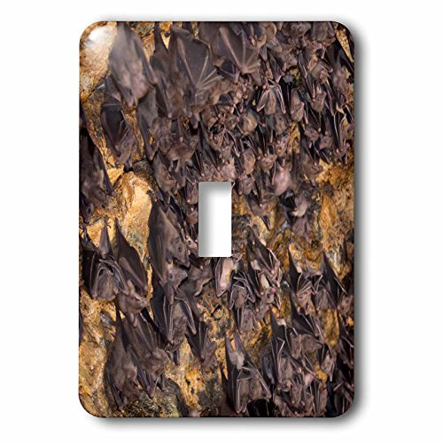 Danita Delimont - bats - Indonesia, Bali. Pura Goa Lawah Temple of the Bat Caves - Light Switch Covers - single toggle switch (lsp_225784_1) by 3dRose