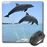 3dRose LLC 8 x 8 x 0.25 Inches Mouse Pad, Atlantic Bottlenose Dolphin Roatan Honduras Franklin Viola (mp_86555_1)