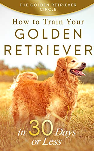 Golden Retriever How To Train Your Golden Retriever In 30 Days Or