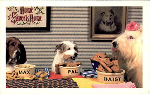 The North Shore Animal League Dogs Original Vintage Postcard from CardCow Vintage Postcards