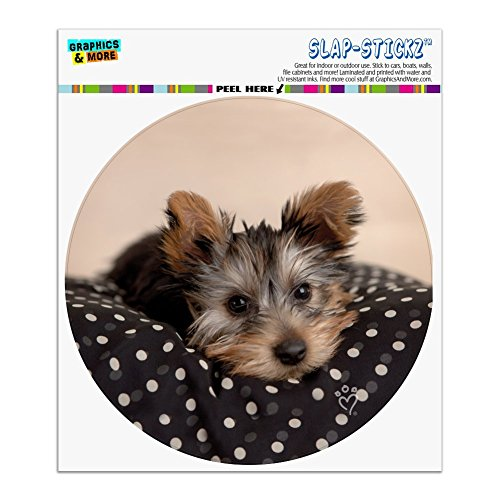 Graphics and More Yorkie Yorshire Terrier Puppy Dog on a Spotted Cushion Automotive Car Window Locker Circle Bumper Sticker
