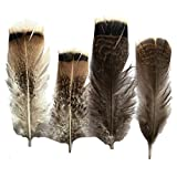 Sowder 20pcs Turkey Pheasant Plumage Feathers 4-8 Inches for Home Wedding Decoration