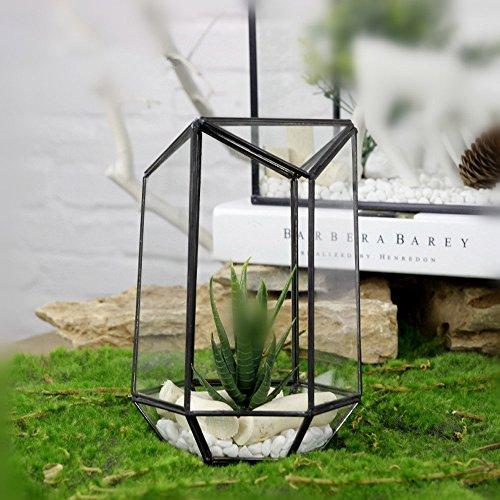 Noah Decoration Hexagonal Air Plants/ Succulent Plants Gl...
