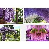 50pcs giardino di piante / semi di fiori borsa di glicine, fiori di glicine, cinese glicine bonsai cielo bianco blu giallo rosa viola liberano la nave