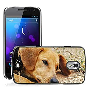 Hot Style Cell Phone PC Hard Case Cover // M00110054 Dog Sad Exposed Bitch Animal Shelter // Samsung Galaxy Nexus GT-i9250 i9250