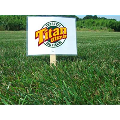 Titan Ultra Tall Fescue Grass Seed (Certified) - 1 Lb. : Garden & Outdoor