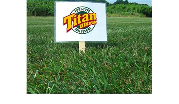 50 Lbs. Titan Rx Turf Type Tall Fescue Grass seed Certified