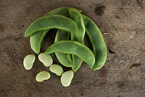 David's Garden Seeds Bean Lima King of The Garden (White) 25 Non-GMO, Heirloom ()
