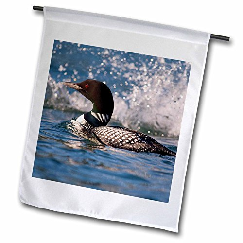 3dRose Common Loon Bird, Whitefish Lake in Montana - Chuck Haney - Garden Flag, 12 by 18