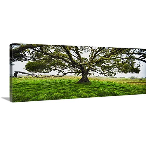 GREATBIGCANVAS Gallery-Wrapped Canvas Entitled Koa Tree Panorama Hawaii by 90
