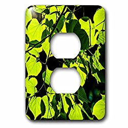 3dRose Alexis Photography - Seasons Summer - Sunlit linden tree leaves, black background - Light Switch Covers - 2 plug outlet cover (lsp_265610_6)
