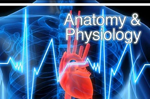 anatomy learnsmart 1 Buy anatomy and physiology - connect with learnsmart 2nd edition (9781259657269) by michael p mckinley, valerie dean o'loughlin and theresa stouter bidle for up to 90% off at textbookscom.