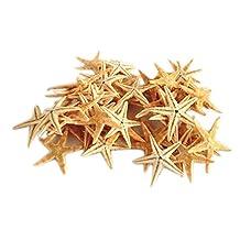 100 pcs Small Starfish Star Sea Shell Beach Craft 0.5 - 3.0 Cm