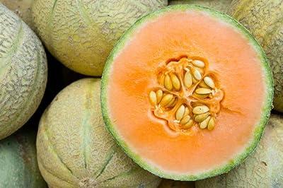 Honeydew Orange - Melon Seeds