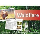 Waldtiere - Fotokarten mit Sachinfos