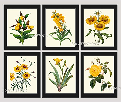 Botanical Print Set of 6 Antique Beautiful Redoute Flowers Yellow Lady's Slipper Blanket Flower