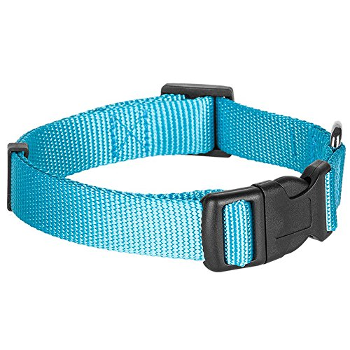 Blueberry Pet 32 Colors Classic Dog Collar, Medium Turquoise, X-Small, Neck 7.5-10, Nylon Collars for Dogs