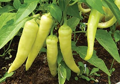 100 Sweet Banana Pepper Seeds