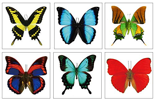 Large Butterfly Temporary Tattoos by Butterfly Utopia (12 Sheets)