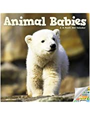 Animal Babies Calendar 2022 -- Deluxe 2022 Baby Animals Wall Calendar Bundle with Over 100 Calendar Stickers (Animal Babies Gifts, Office Supplies)