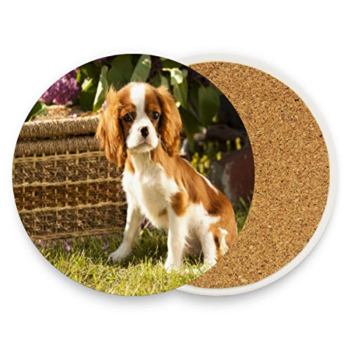 Coasters for Drinks,Cute Pet Cavalier King Charles Spaniel Ceramic Round Cork Trivet Heat Resistant Hot Pads Table Cup Mat Coaster-Set of 4 Pieces