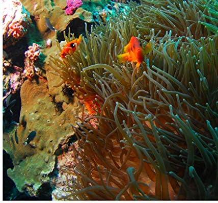 Sharplace Fondo de Acuario Coral 3D Pegatina Fish Tank Decoración Pared Pintura Cómodo - XXL