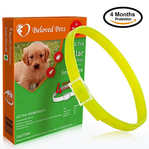 Beloved Pets Flea&Tick Collar (100% Safe and effective) - Flea Control Collar for Dogs and Puppies. Quick and long lasting protection. Kills Flea, Ticks and bugs effectively (small dogs, Green)