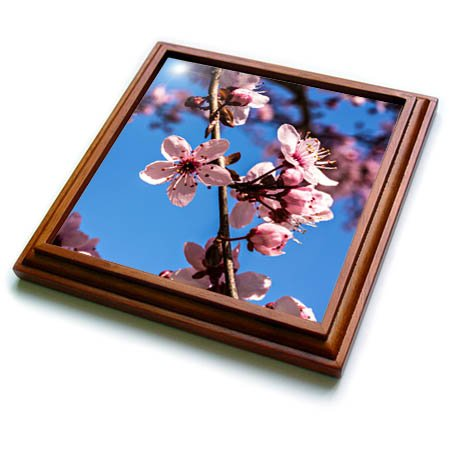 3dRose trv_278851_1 Washington, Dc Pink Cherry Blossoms on Branches Trivet with Tile, 8'' x 8''
