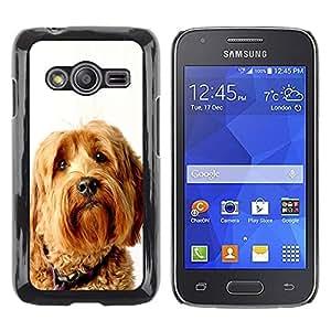 Be Good Phone Accessory // Dura Cáscara cubierta Protectora Caso Carcasa Funda de Protección para Samsung Galaxy Ace 4 G313 SM-G313F // Labradoodle Terrier Yellow Fur Dog