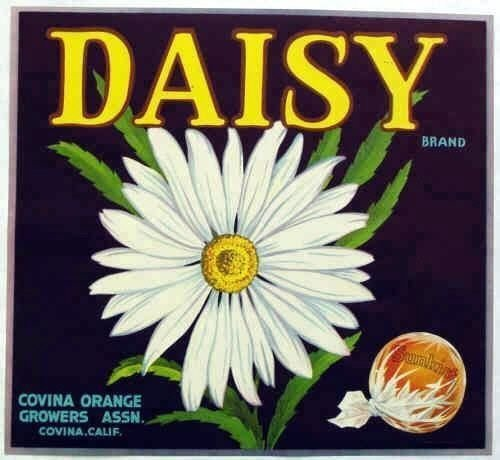 - 1950s Daisy Flower Fruit Crate Label