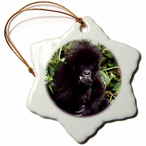 Baby Mountain Gorilla (3dRose orn_72392_1 Mountain Gorilla Baby, Rwanda-AF35 KSC0000-Kevin Schafer-Snowflake Ornament, Porcelain, 3-Inch)