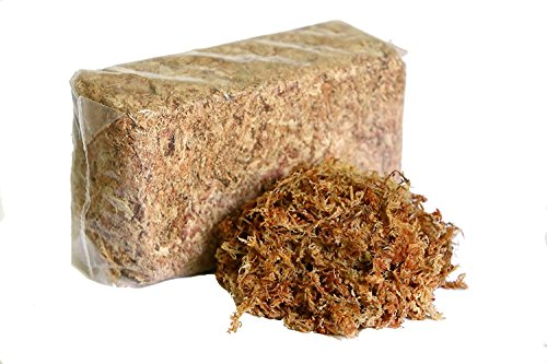 Waldor Orchids - Peruvian Sphagnum Moss by Orchid Nerd (Peruvian Sphagnum Mos, 150 Grams)