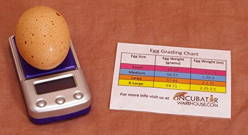 digital-egg-scale-accurate-humidity-measurement-and-egg-sizing